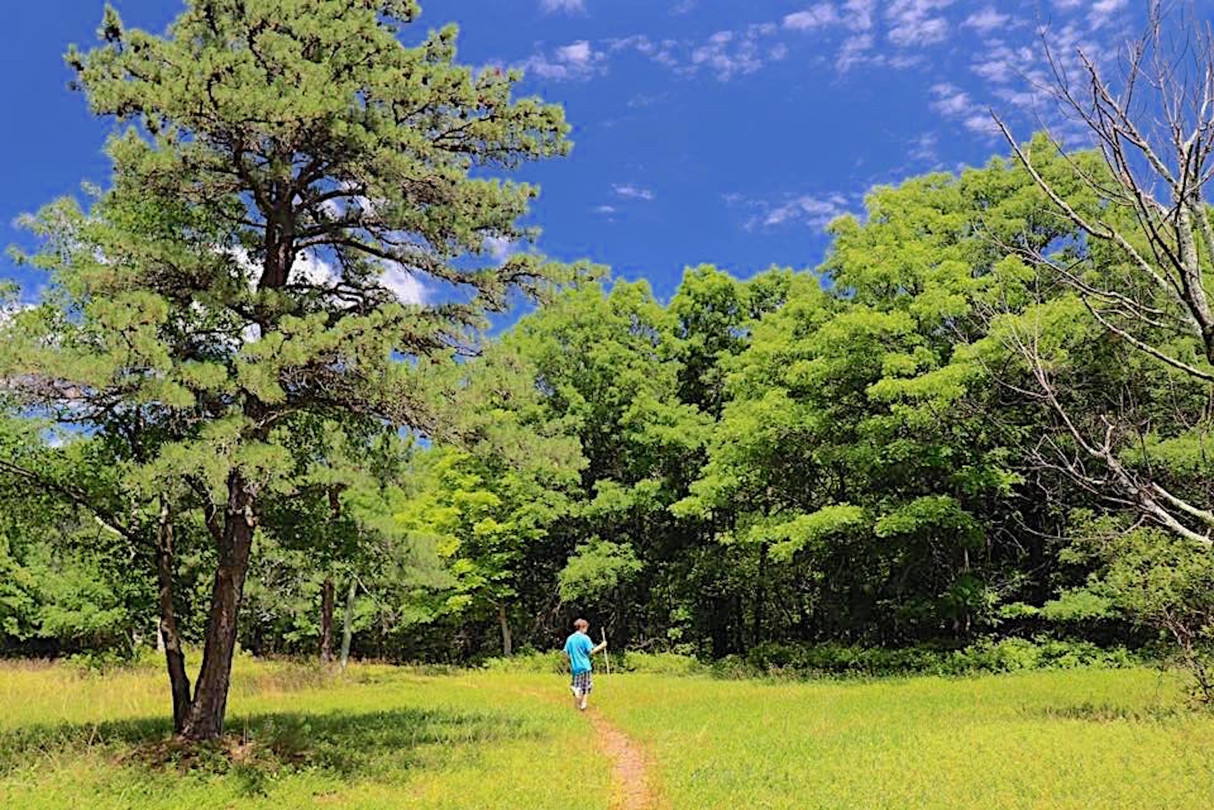 Person walking towards a forest.