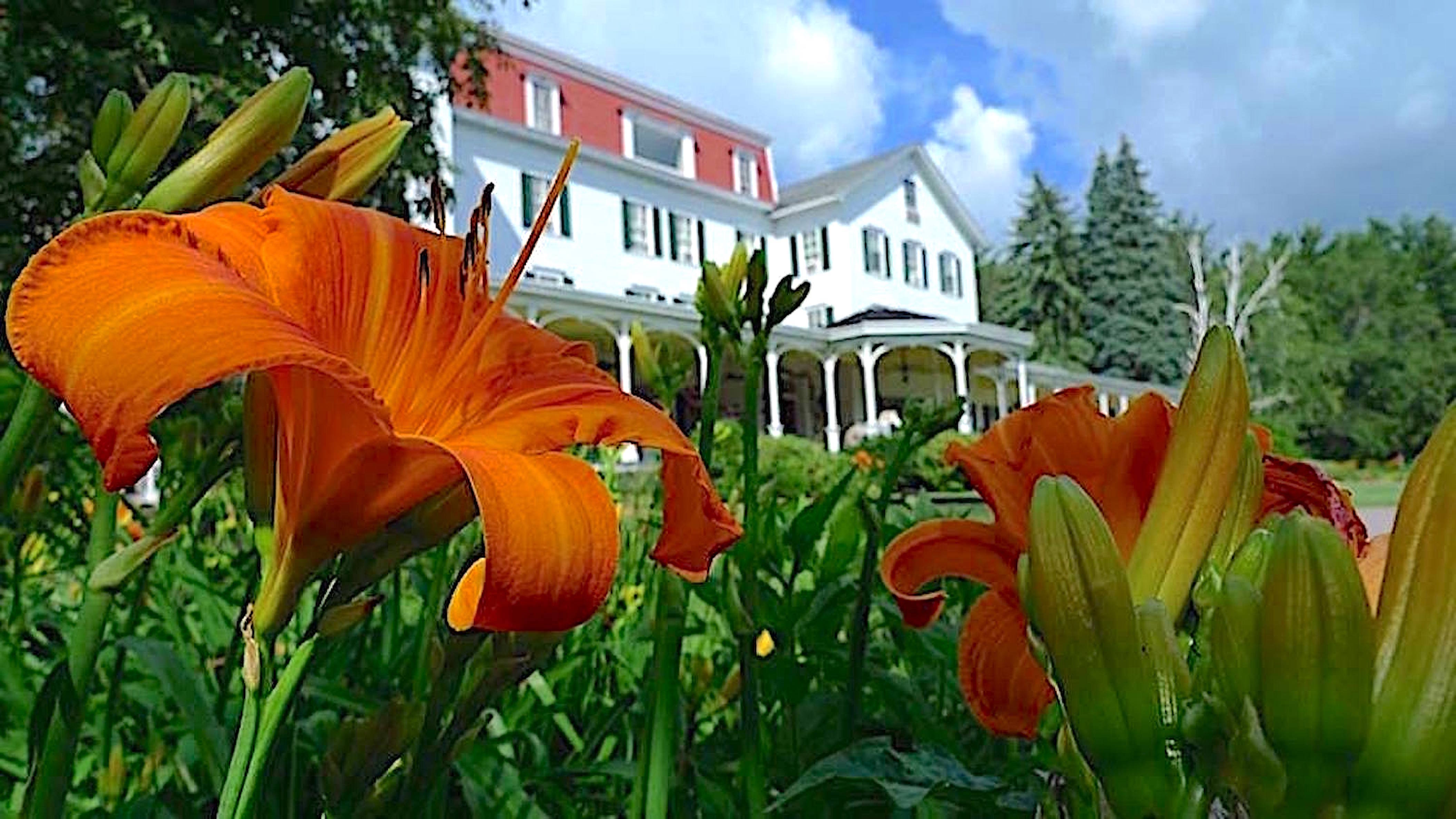 Flowers with colonial resort in background